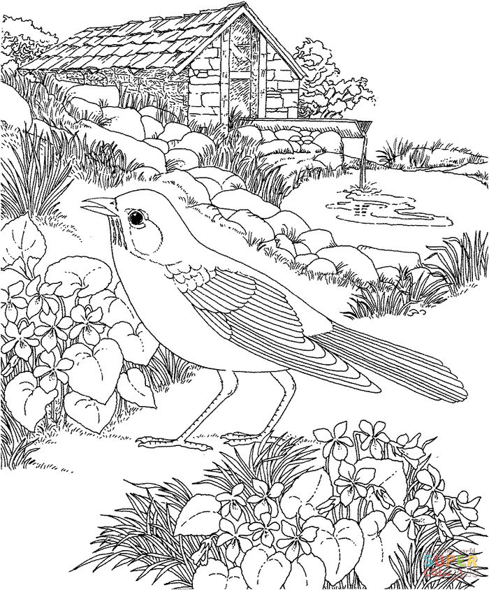 Realistic Bird Coloring Pages