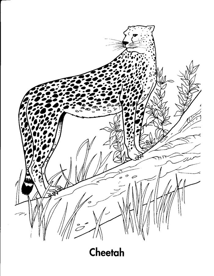 Realistic Cheetah In Motion Coloring Pages