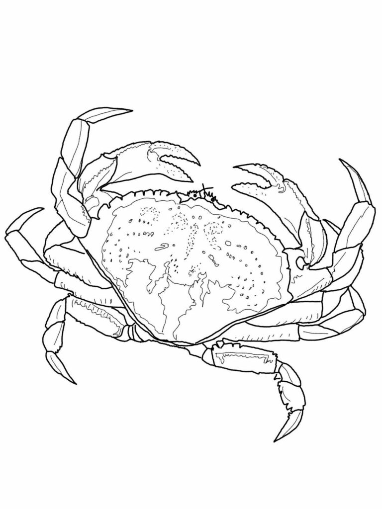 Red Crab Coloring Pages Free