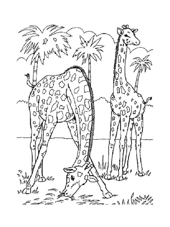 Big Giraffe Coloring Pages