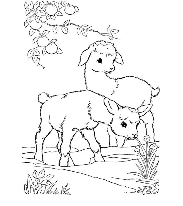Cute Baby Goat Coloring Pages