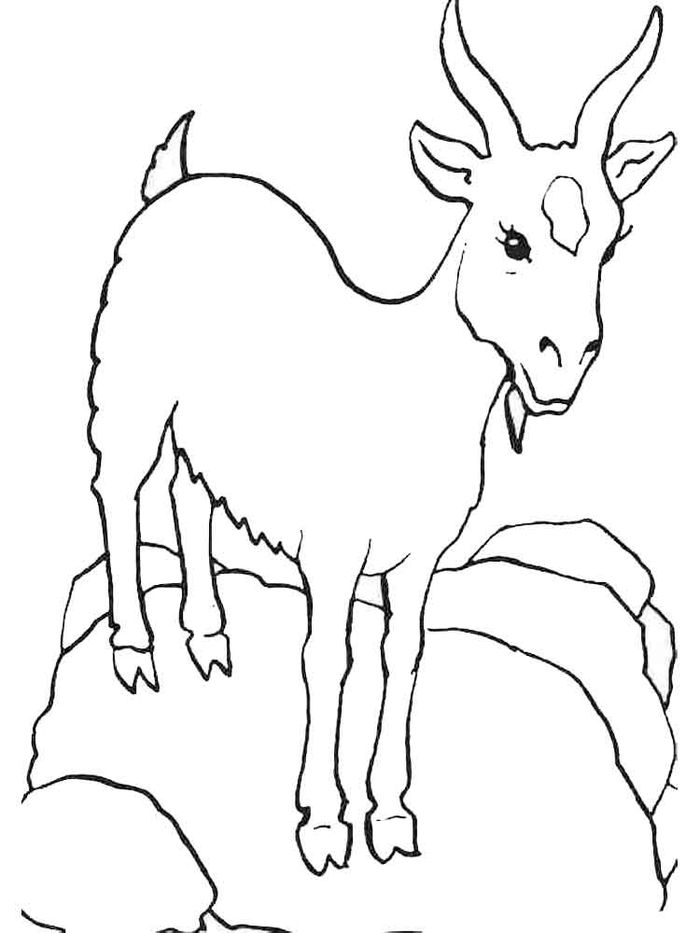 Dairy Goat Coloring Pages
