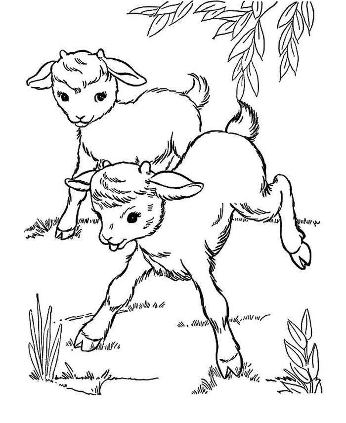 Images Of A Swiss Goat Hearder Coloring Pages