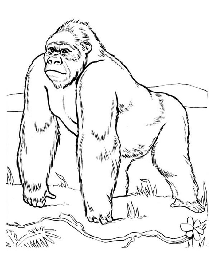 Realistic Gorilla Coloring Pages