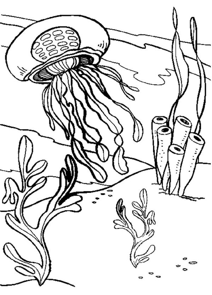 Animal Coloring Pages Jellyfish