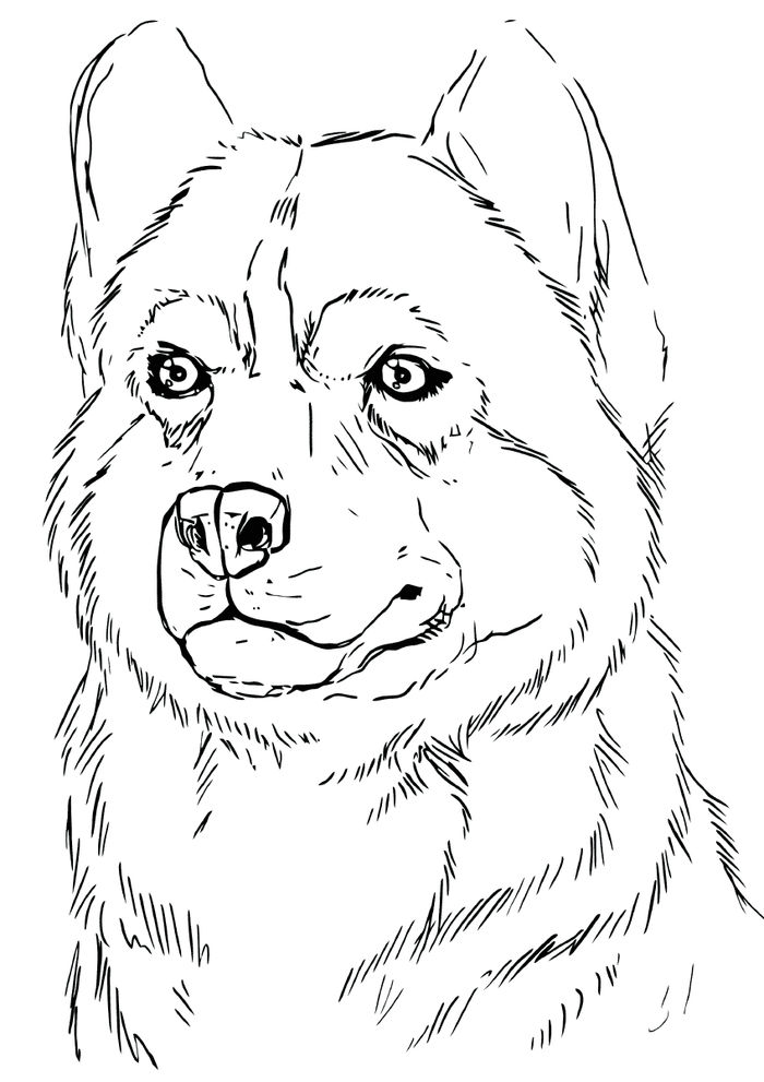 Coloring Pages Of Arctic Husky