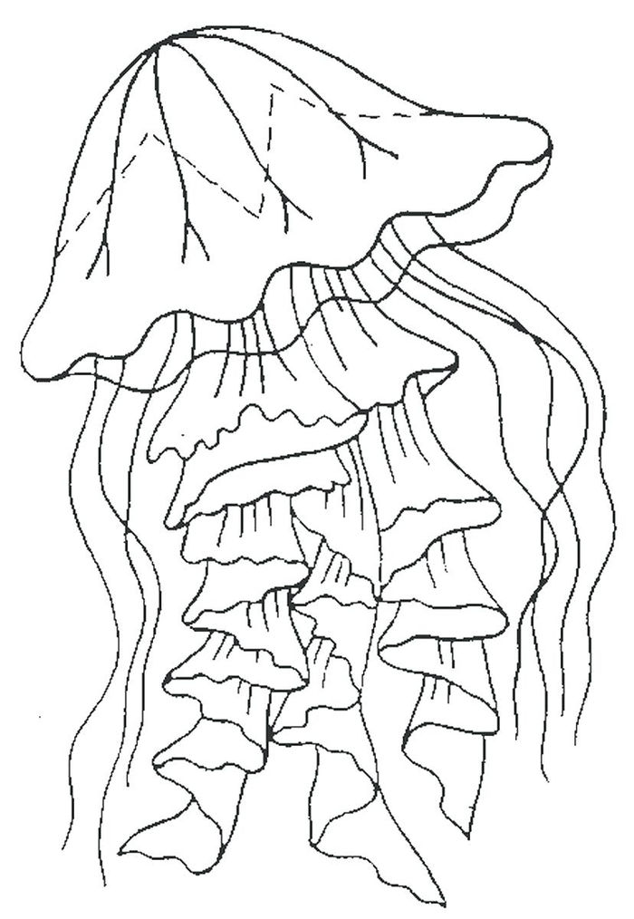 Free Printable Jellyfish Coloring Pages 1